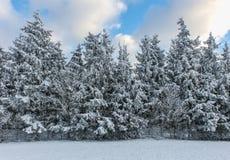 för dagskog för rotting molnig vinter för snow för lake Royaltyfri Fotografi