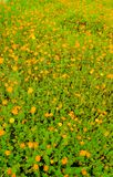 för designmodell för bakgrund färgrik swirl Trädgård Arkivfoton