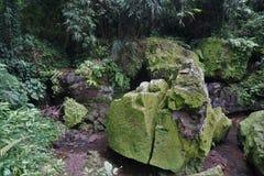 För djungel gräsplan mycket med många växter i Bali Indonesien Royaltyfri Fotografi