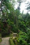 För djungel gräsplan mycket med många växter i Bali Indonesien Arkivfoton