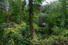 För djungel gräsplan mycket med många växter i Bali Indonesien Arkivfoto