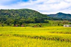 För djungel- och bergsjö för frodig grön regnskog tropisk sikt i södra Eeast asiatisk morgonsoluppgång royaltyfri bild