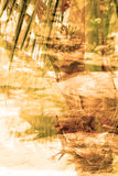 För djungelabstrakt begrepp för dubbel exponering tropisk bakgrund Royaltyfri Foto