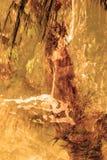 För djungelabstrakt begrepp för dubbel exponering tropisk bakgrund Royaltyfri Fotografi
