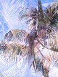 För djungelabstrakt begrepp för dubbel exponering tropisk bakgrund Royaltyfria Bilder