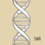 för dna-guld för bakgrund 3d isolerad white illustration DNAsymbol Dna-spiralsymbol Gene Icon Arkivbilder