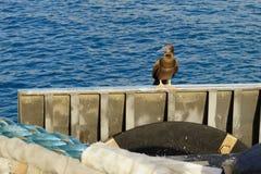 För dumskalleSula för tonåring brun leucogaster i en havsport Royaltyfri Bild