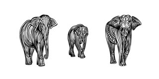 För elefantfamiljen för handen skissar den utdragna översikten Teckning för vektorsvartfärgpulver som isoleras på vit bakgrund Gr vektor illustrationer