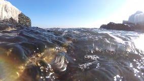 För Enteromorpha för havsgräsplan Porphira intestinalis och för röda alger leucostica i Blacket Sea arkivfilmer