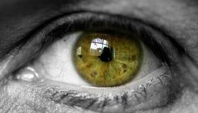 för eos-öga för kamera 20d skytte för makro mänskligt Royaltyfria Foton