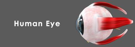 för eos-öga för kamera 20d skytte för makro mänskligt royaltyfri illustrationer