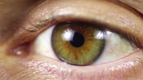 för eos-öga för kamera 20d skytte för makro mänskligt stock video