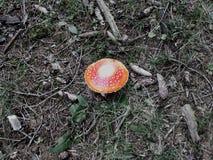 för eps-fluga för agaric 8 champinjon över vektorwhite Royaltyfria Bilder