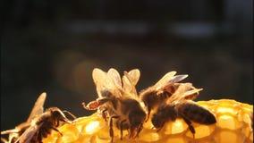 för eps-format för 8 extra bin illustratör för honungskaka lager videofilmer