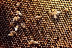 för eps-format för 8 extra bin illustratör för honungskaka royaltyfri foto