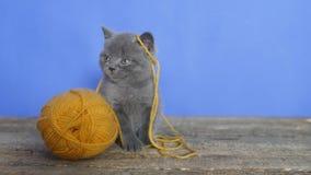 för eps-kattunge för 8 boll tråd lager videofilmer