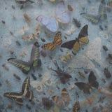 för eps-modell för 10 bakgrund wallpaper för tappning för vektor purpur Royaltyfria Bilder