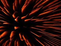 För explosioncloseup för fyrverkerier guld- bakgrund för abstrakt begrepp Arkivbild