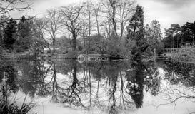 För exponeringspanorama för B&W långt landskap av vattenreflexionen av träd royaltyfri foto