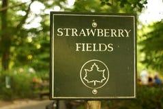 för fält jordgubbe för alltid Arkivbild