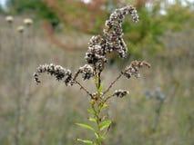 för fältby för ogräs torr växt Arkivbilder