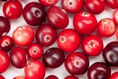 För färgform för lösa tranbär variation Röd mogen bärmakrosikt kopiera avstånd upp sikt studiofoto Royaltyfri Fotografi