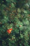 för färggräsplan för blomma orange närbild för natur för skönhet för trädgård för suddighet för bakgrund Arkivfoton