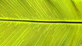 För fågel` s för slut övre grön bakgrund för abstrakt begrepp för natur för blad för ormbunke för rede Royaltyfri Foto