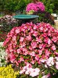 för fågelblomma för bad härlig trädgård Royaltyfria Bilder