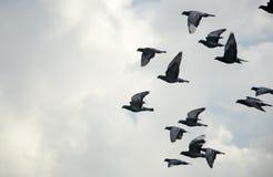 för fågelflyg för höst stor fluga över duvaskytrees vektor illustrationer
