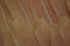 för filéfisk för bakgrund olik white för serie för bild för mat ny skaldjur Fisk utan ben Royaltyfri Bild