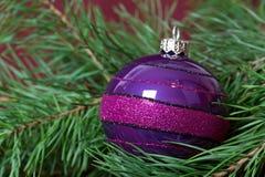 för filialjul för bauble stor purple för gran Royaltyfria Foton