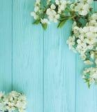 För filialkort för körsbärsröd blomning romans för säsong för gräns på en blå träbakgrund royaltyfri bild