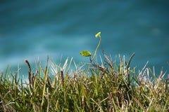 för fjärdbyron för 2009 august Australien vatten för gräs Royaltyfria Bilder