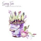 för flygillustration för näbb dekorativ bild dess paper stycksvalavattenfärg Trädgårds- hink med hyacintplantor, hjärta och etike Royaltyfri Foto