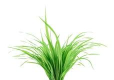 för formatgräs för 8 isolerade extra eps green v-vektorwhite royaltyfria foton