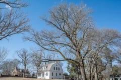för formatillustratör för 8 extra eps tree för oak Fotografering för Bildbyråer