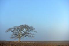 för formatillustratör för 8 extra eps tree för oak arkivfoton