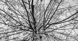 För fotografikonst för svartvita kala träd tonar abstrakt splittring Royaltyfria Foton