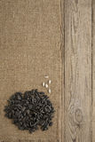 för frösolros för bakgrund svart textur Arkivbilder