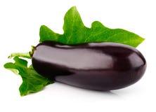 för fruktgreen för ägg ny växt för leaf Royaltyfria Bilder