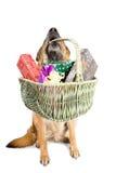 för gåvasheepdog för jul tysk sitting royaltyfri foto