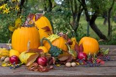 för garneringdruvor för höst kastanjebrunt för oktober trä pomegranate Royaltyfri Bild