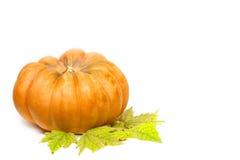 för garneringdruvor för höst kastanjebrunt för oktober trä pomegranate Royaltyfria Bilder