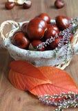 för garneringdruvor för höst kastanjebrunt för oktober trä pomegranate Fotografering för Bildbyråer