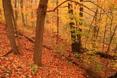för golvskogen för hösten målar den blända orangen havet Arkivfoto