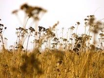 för gräs ditt ängbruk idealt royaltyfria bilder