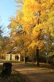 för gräsgreen för höst även väder för sikt för leaves orange tyst Arkivfoto