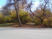 för gräsgreen för höst även väder för sikt för leaves orange tyst Royaltyfria Foton
