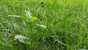 För gräsmattadetalj för grönt gräs slut upp Arkivfoton